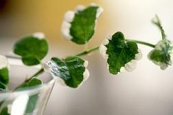 癒しの植物イメージ